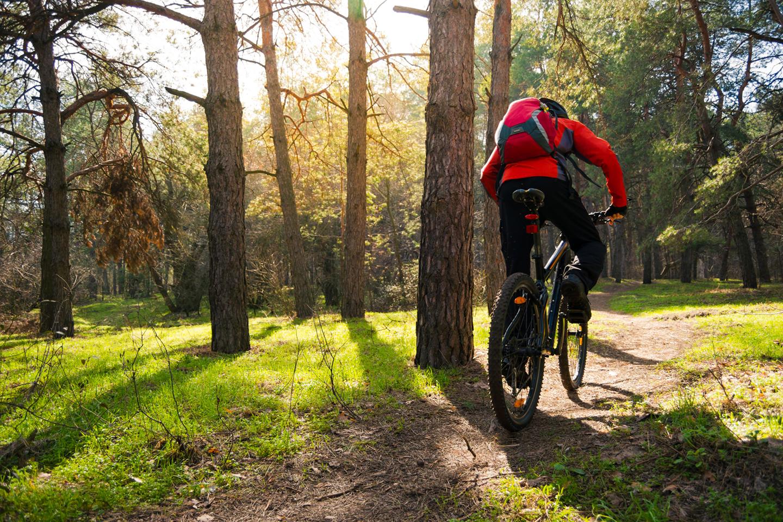 Mountain bike forest trail